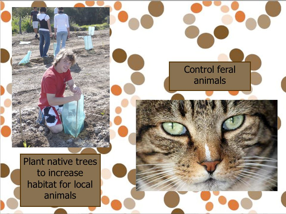 Plant native trees to increase habitat for local animals Control feral animals