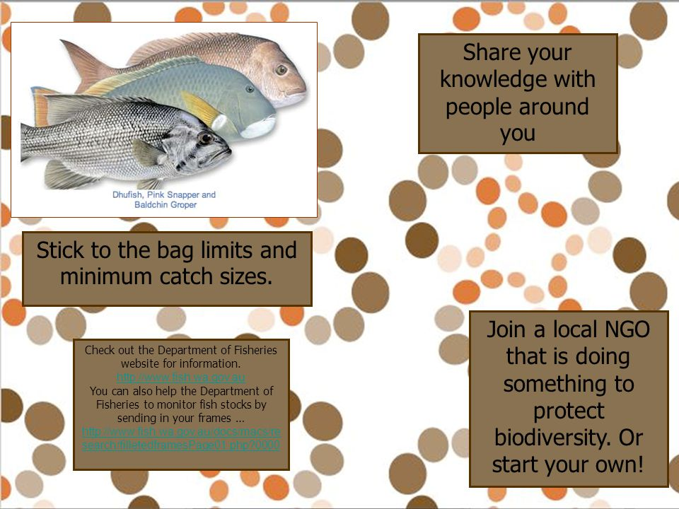 Stick to the bag limits and minimum catch sizes. Share your knowledge with people around you Check out the Department of Fisheries website for informa