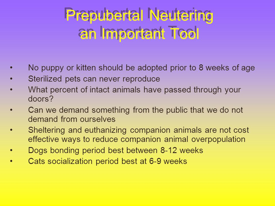 Prepubertal Neutering an Important Tool No puppy or kitten should be adopted prior to 8 weeks of age Sterilized pets can never reproduce What percent