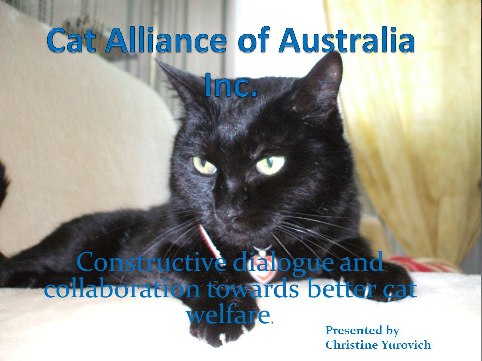 Objectives of CAA In Australia hundreds of thousands of cats are killed each year.