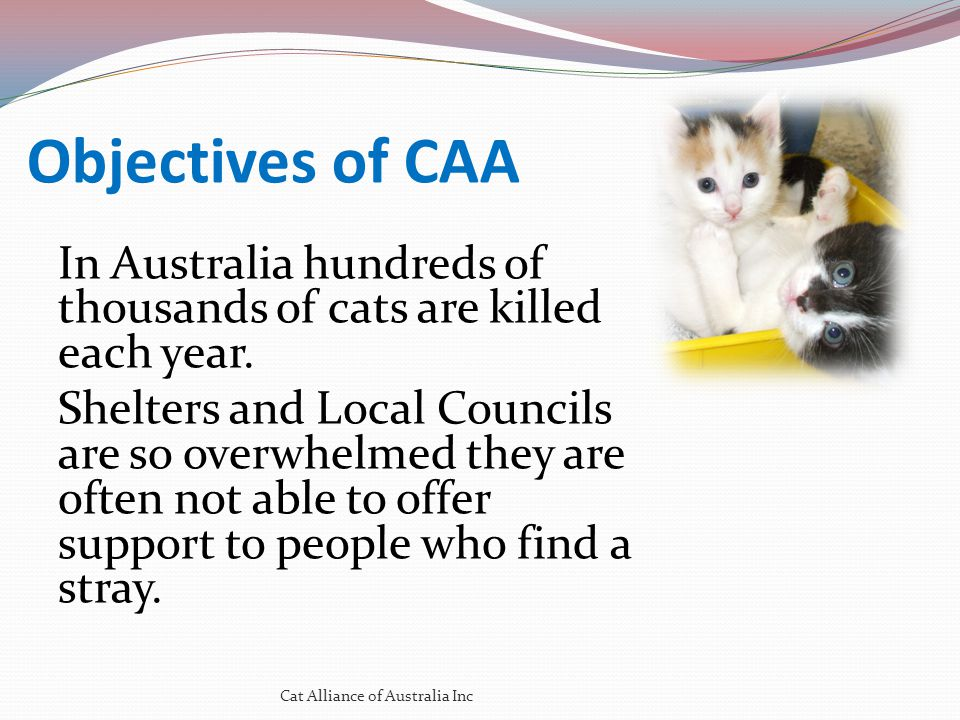 The End Cat Alliance of Australia Inc Website: www.catallianceaustralia.org The best way to find yourself is to lose yourself in the service of others Ghandi.