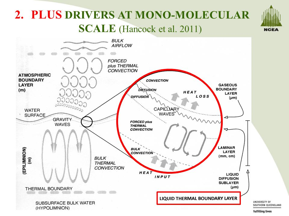 2.PLUS DRIVERS AT MONO-MOLECULAR SCALE (Hancock et al. 2011)