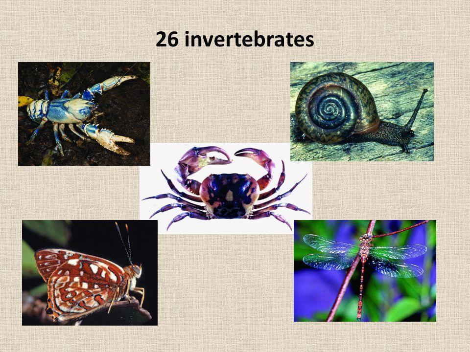 26 invertebrates