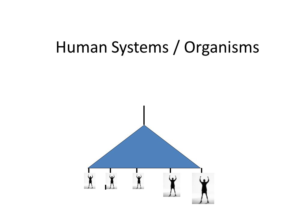 Human Systems / Organisms
