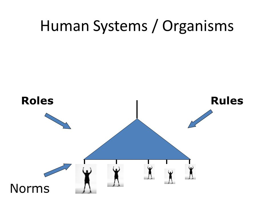 Human Systems / Organisms Norms RolesRules