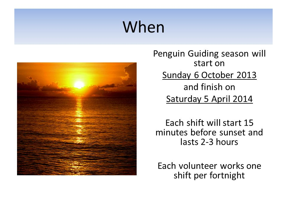 When Penguin Guiding season will start on Sunday 6 October 2013 and finish on Saturday 5 April 2014 Each shift will start 15 minutes before sunset and