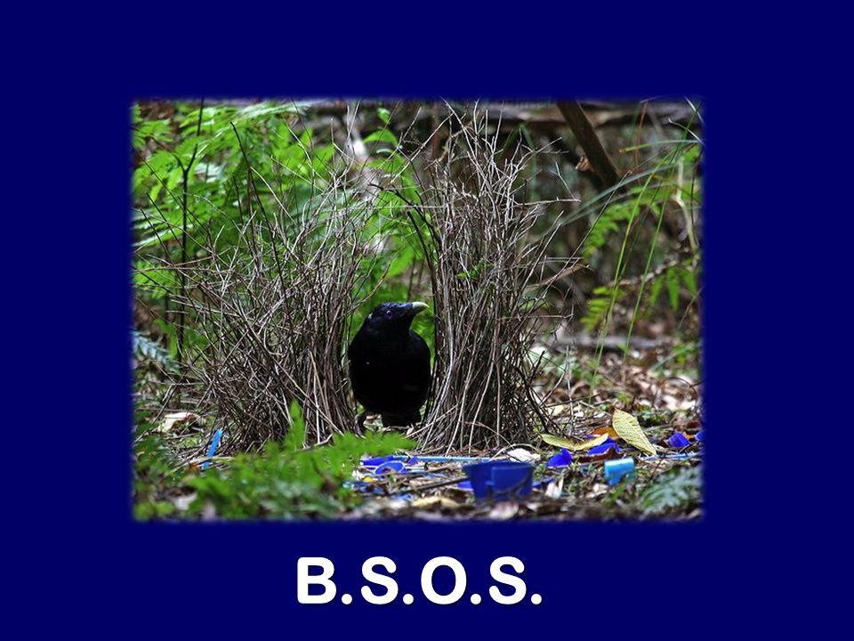 B.S.O.S.