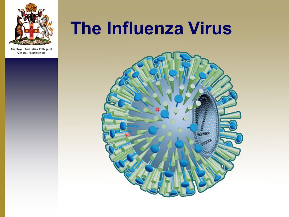 The Influenza Virus