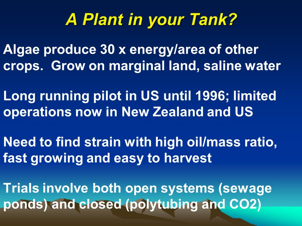 A Plant in your Tank. Algae produce 30 x energy/area of other crops.