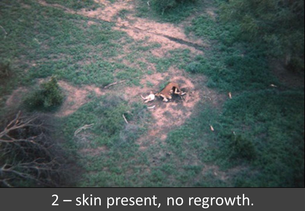2 – skin present, no regrowth.