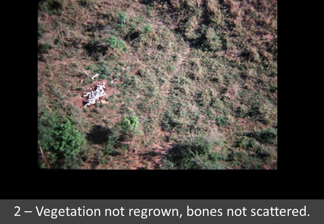 2 – Vegetation not regrown, bones not scattered.