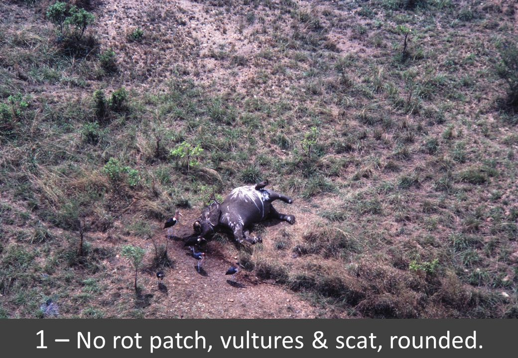 1 – No rot patch, vultures & scat, rounded.