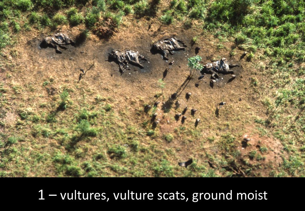 1 – vultures, vulture scats, ground moist