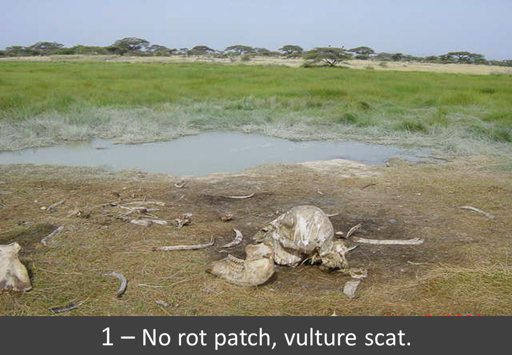 1 – No rot patch, vulture scat.