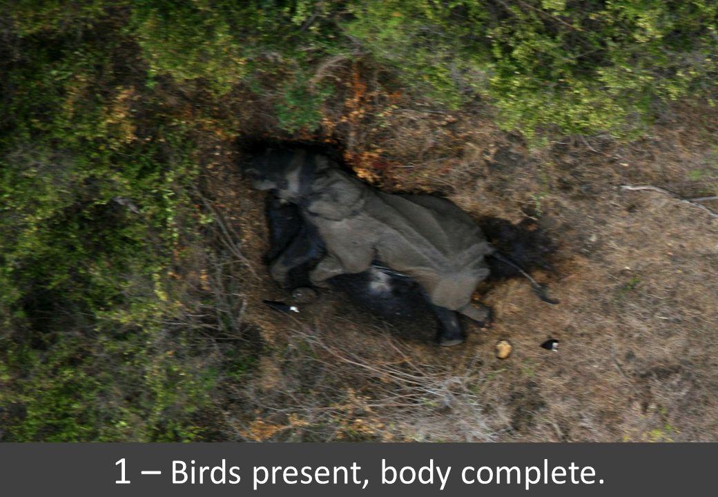 1 – Birds present, body complete.