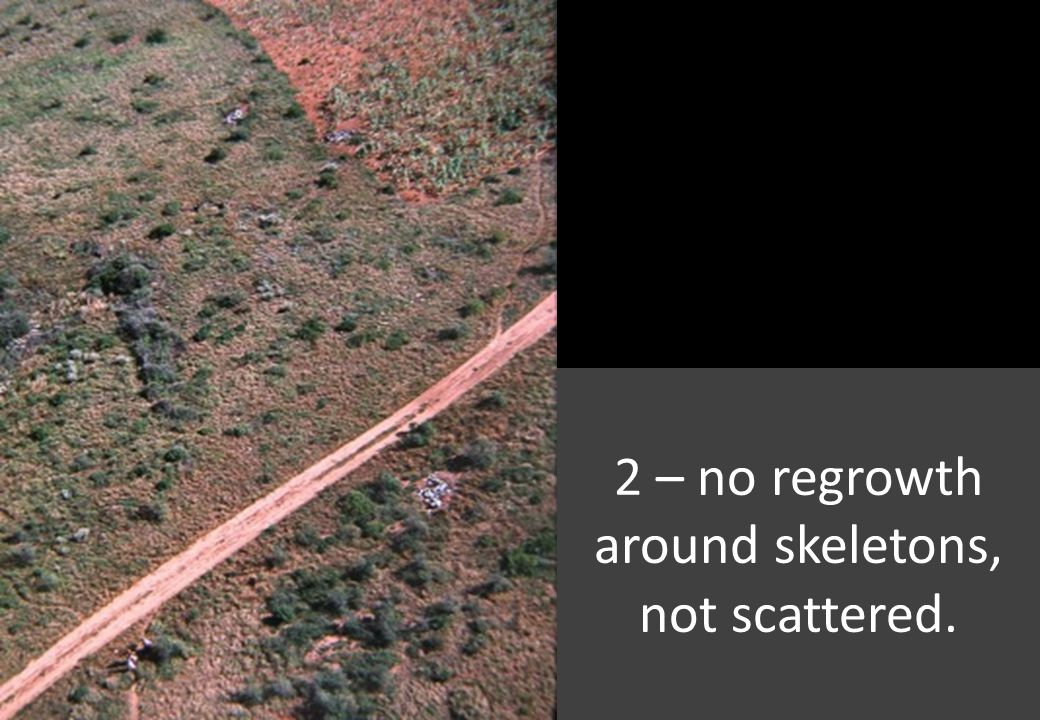 2 – no regrowth around skeletons, not scattered.