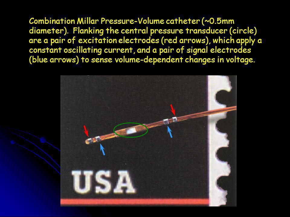 Combination Millar Pressure-Volume catheter (~0.5mm diameter).