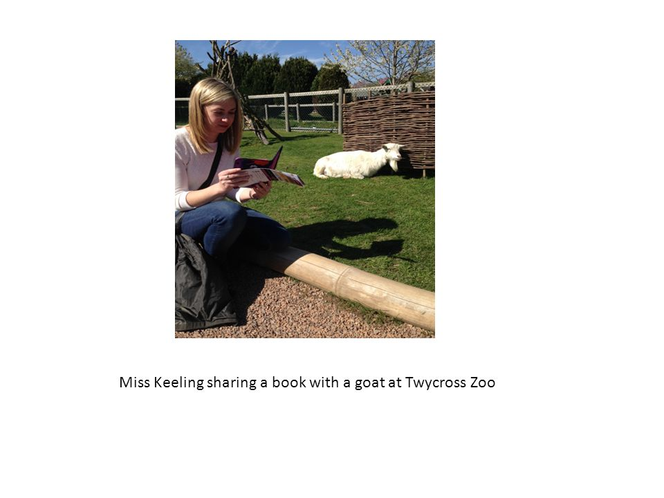 Miss Keeling sharing a book with a goat at Twycross Zoo