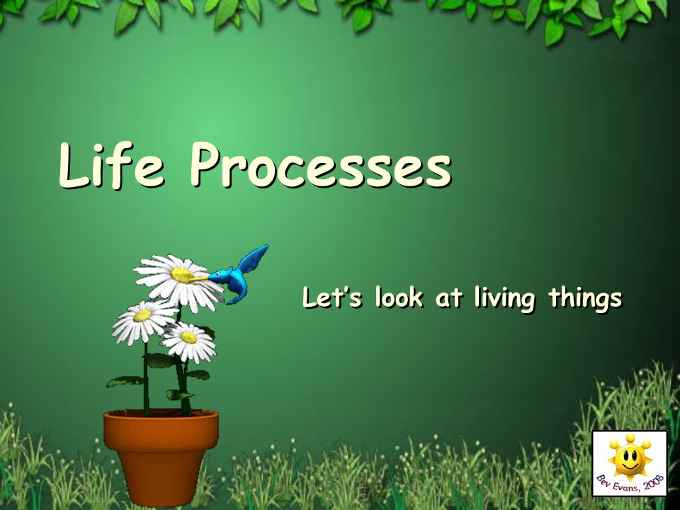 Life Processes Let's look at living things