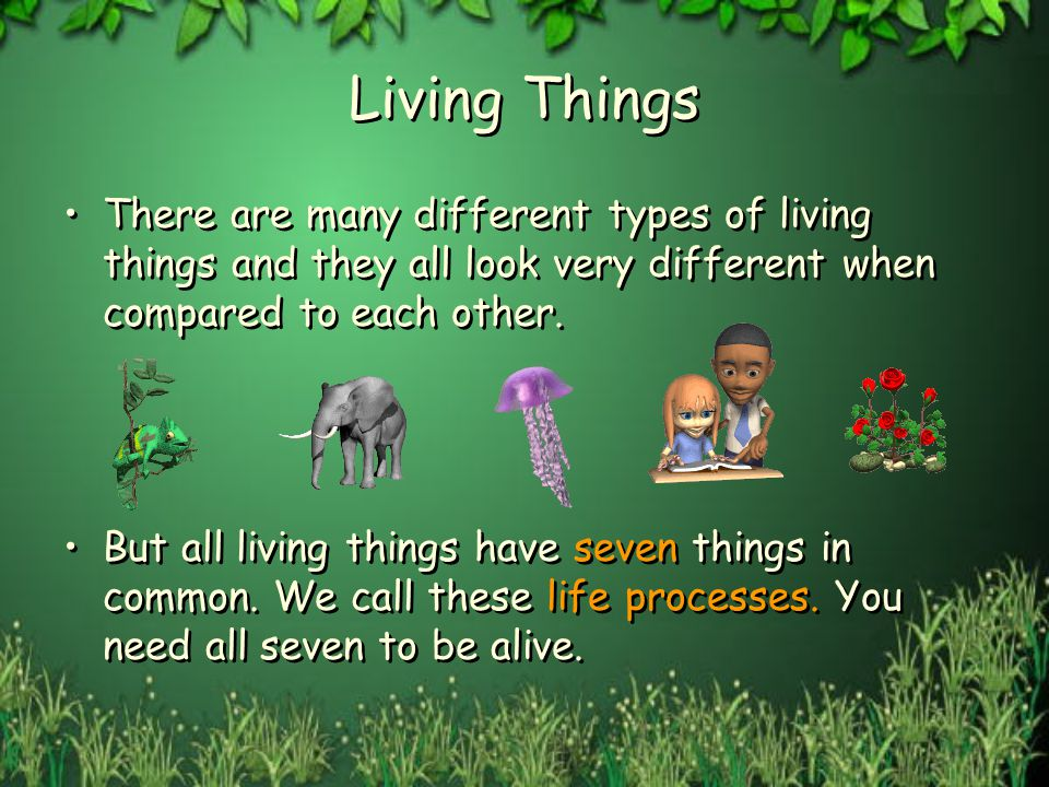Living Things There are many different types of living things and they all look very different when compared to each other. But all living things have