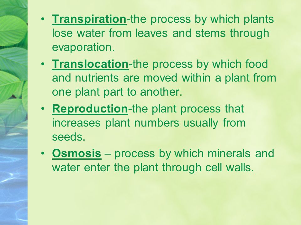 Transpiration-the process by which plants lose water from leaves and stems through evaporation. Translocation-the process by which food and nutrients
