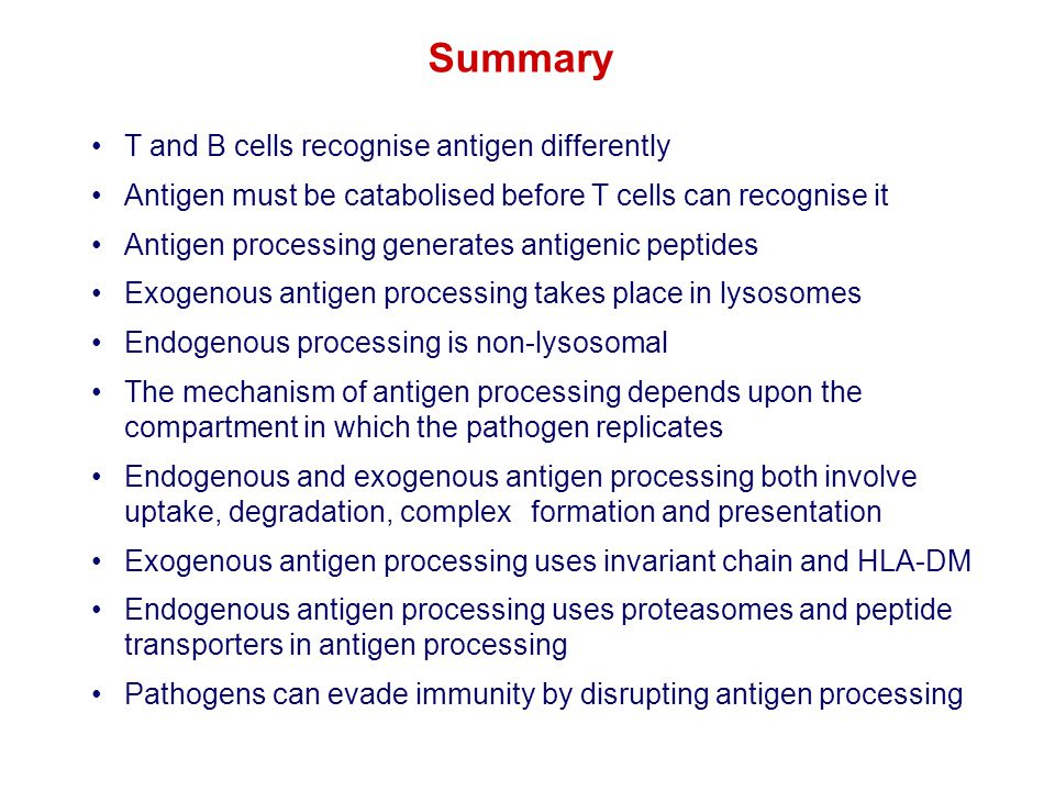 T and B cells recognise antigen differently Antigen must be catabolised before T cells can recognise it Antigen processing generates antigenic peptide