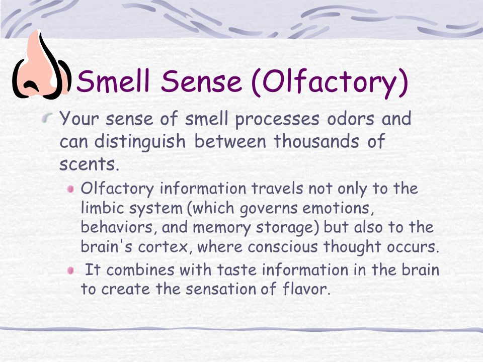 Smell Sense (Olfactory) Your sense of smell processes odors and can distinguish between thousands of scents.