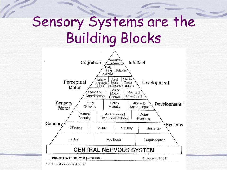 Sensory Systems are the Building Blocks