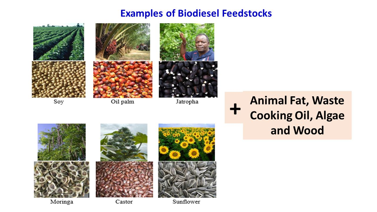 Examples of Biodiesel Feedstocks Animal Fat, Waste Cooking Oil, Algae and Wood +