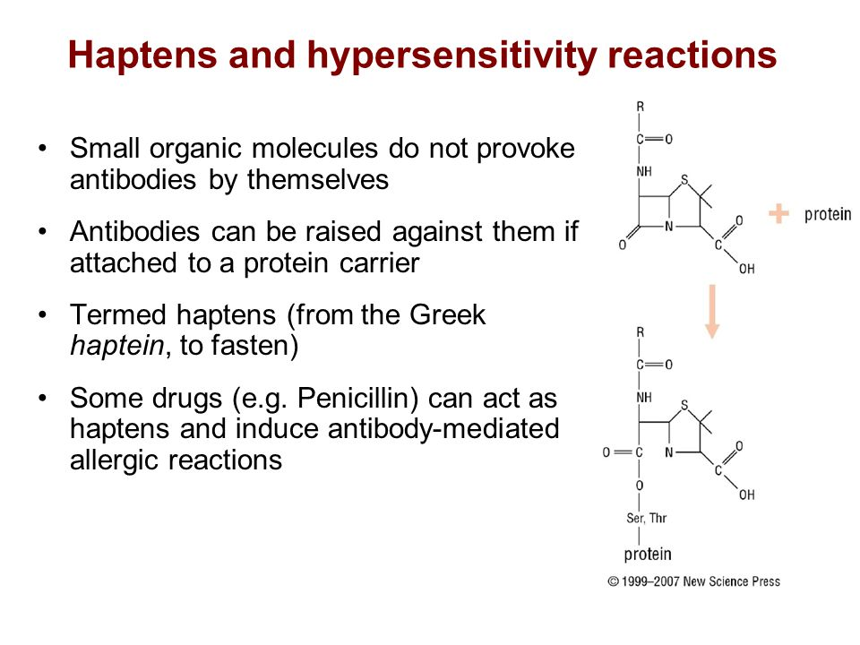 Haptens and hypersensitivity reactions Small organic molecules do not provoke antibodies by themselves Antibodies can be raised against them if attached to a protein carrier Termed haptens (from the Greek haptein, to fasten) Some drugs (e.g.