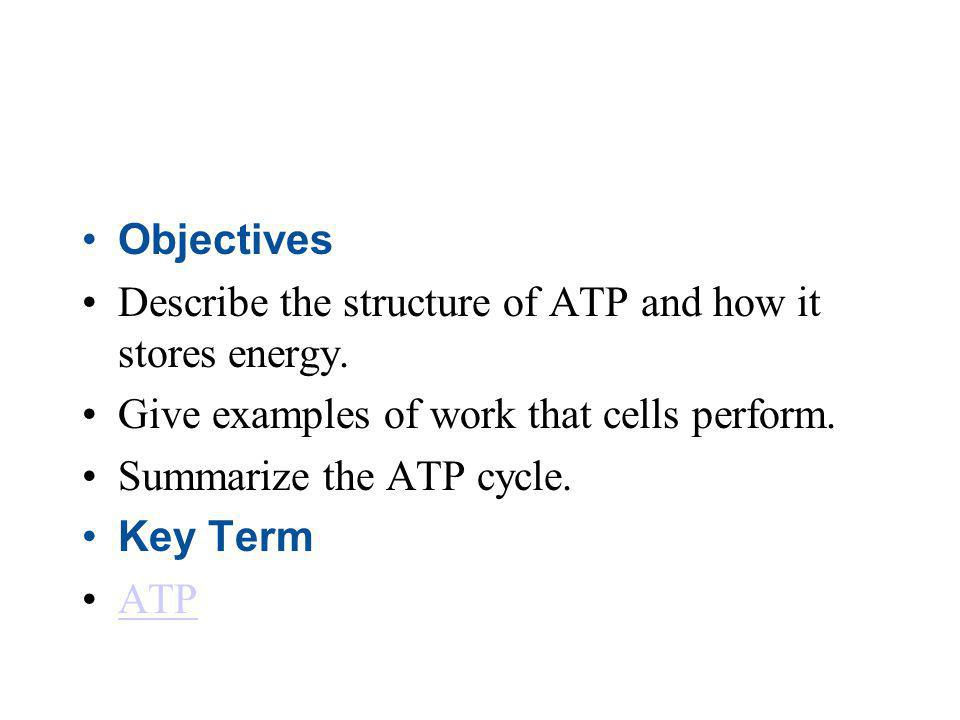 Objectives Describe the structure of ATP and how it stores energy. Give examples of work that cells perform. Summarize the ATP cycle. Key Term ATP