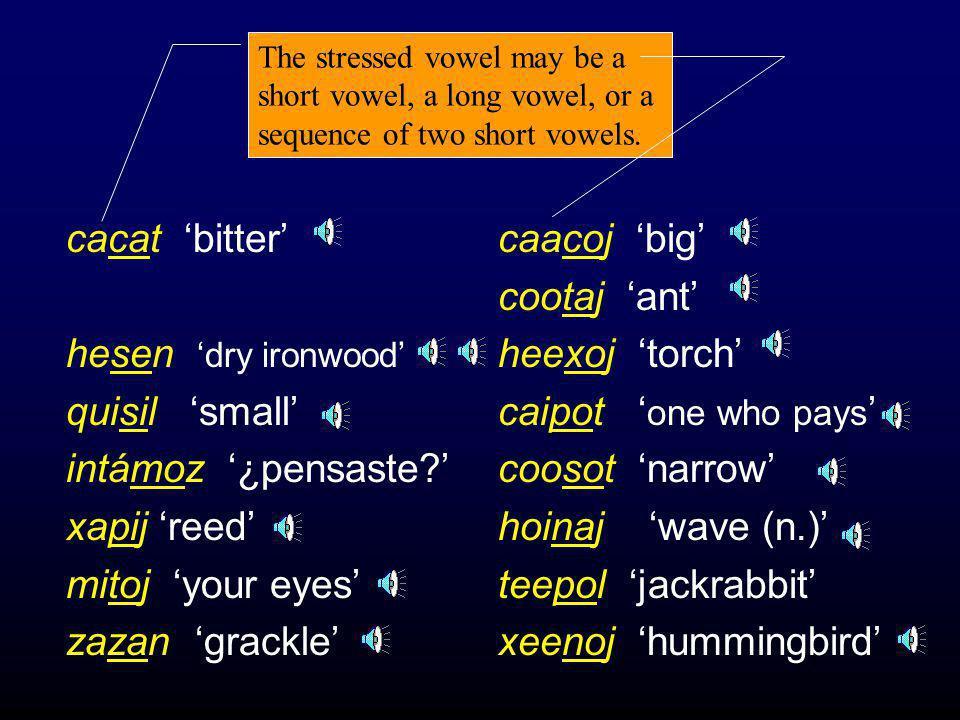 Basic Data In addition: A vowel (V) lengthens in the context:  V C __