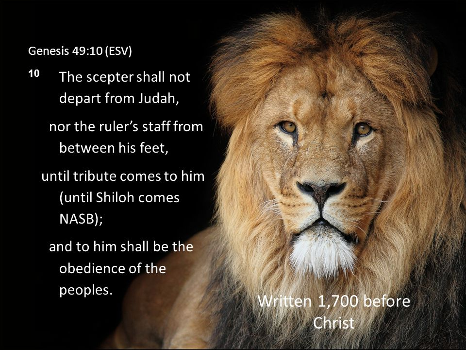 Genesis 49:10 (ESV) 10 The scepter shall not depart from Judah, nor the ruler's staff from between his feet, until tribute comes to him (until Shiloh comes NASB); and to him shall be the obedience of the peoples.