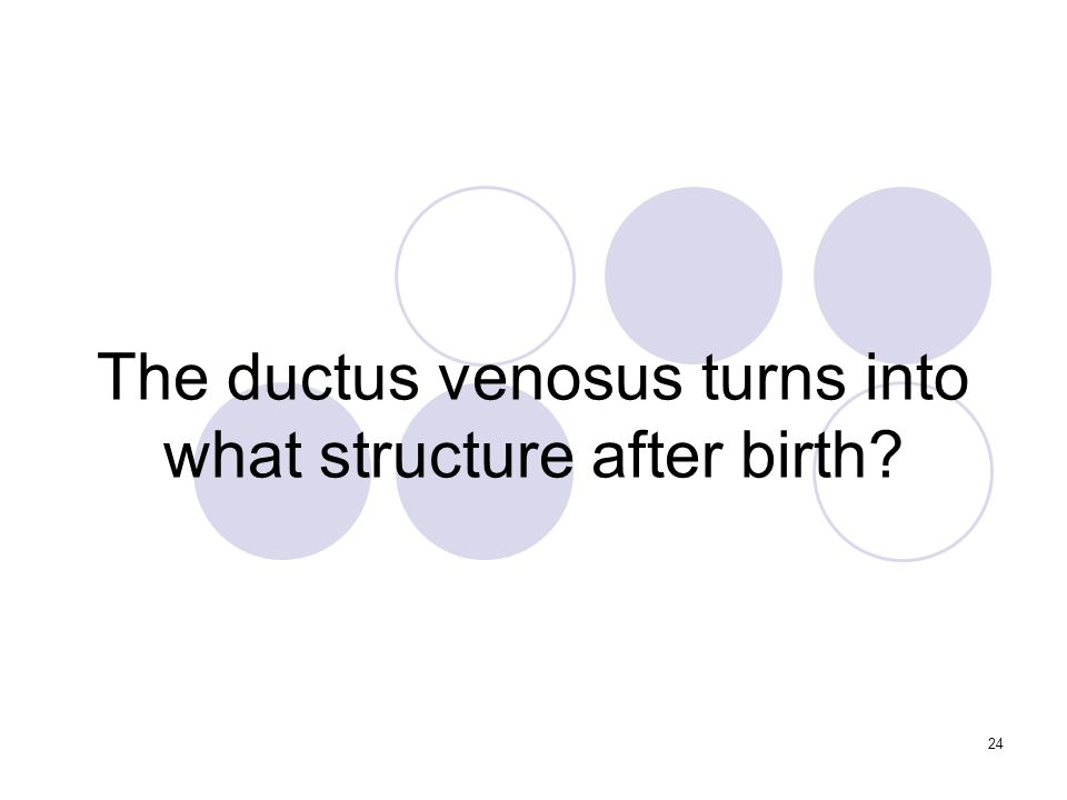 24 The ductus venosus turns into what structure after birth