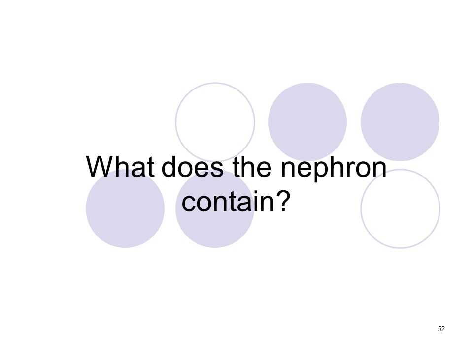 52 What does the nephron contain