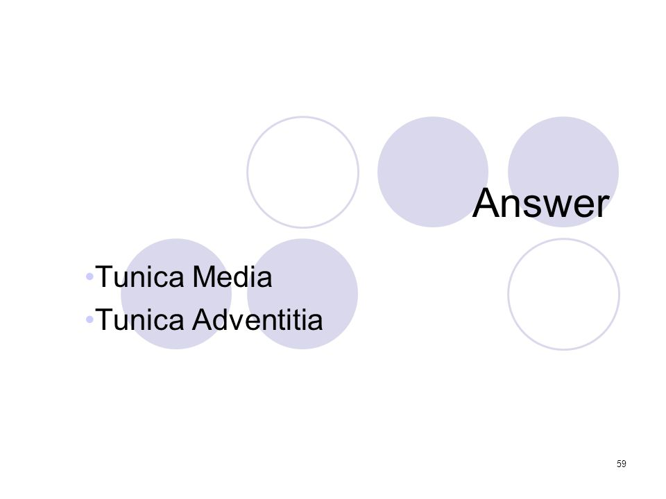59 Answer Tunica Media Tunica Adventitia