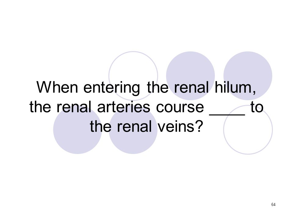 64 When entering the renal hilum, the renal arteries course ____ to the renal veins
