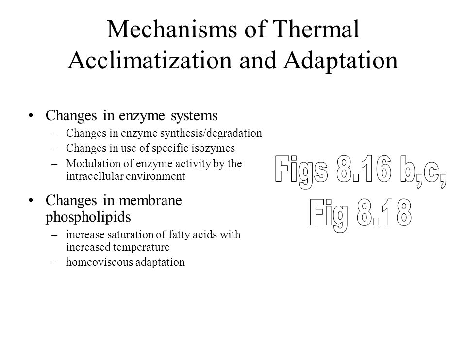 Thermal Acclimatization Acclimation and acclimatization are physiological changes in response to previous thermal history Exposure to warm temperature