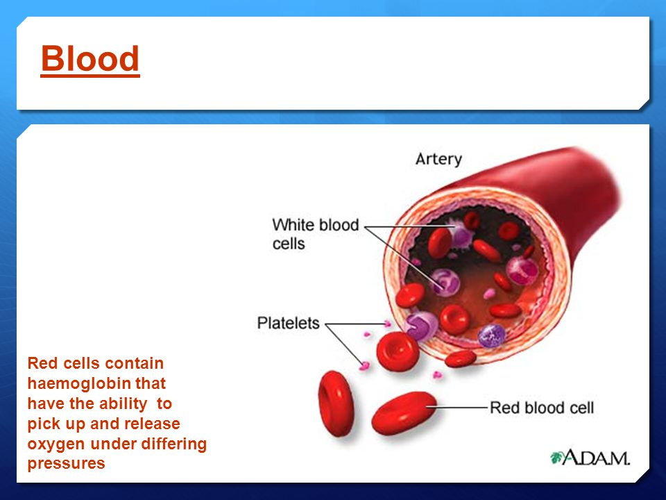 Blood Red cells contain haemoglobin that have the ability to pick up and release oxygen under differing pressures