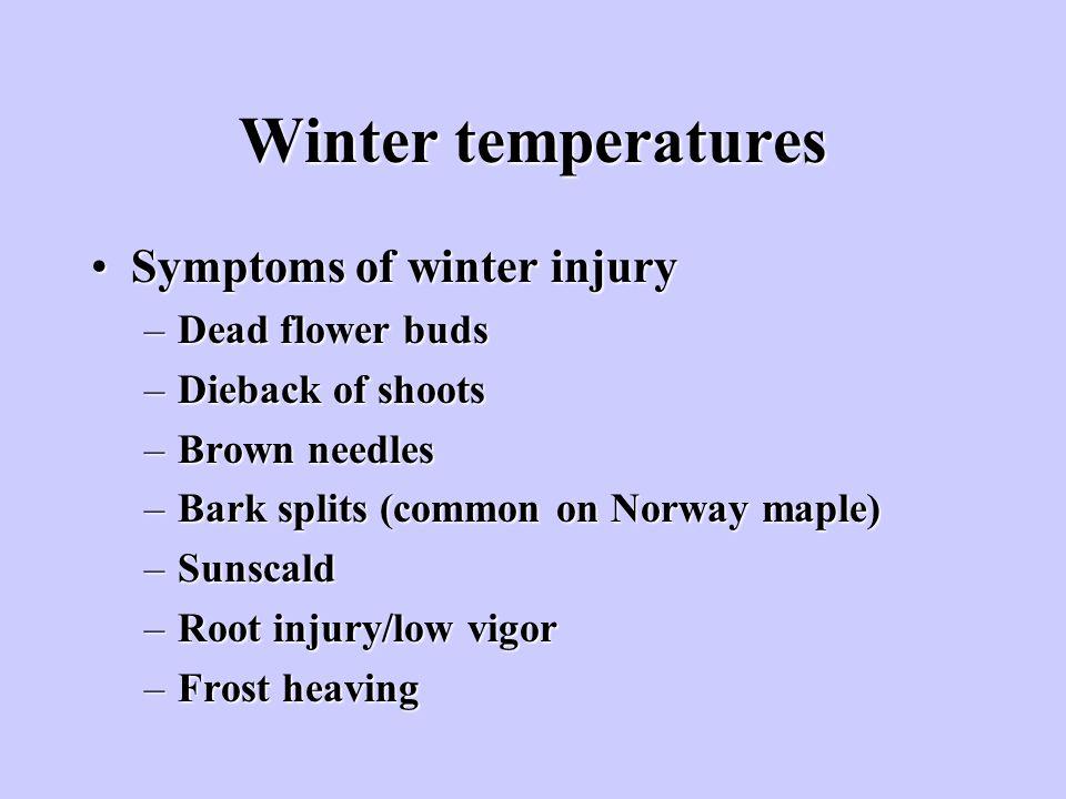 Winter temperatures Symptoms of winter injurySymptoms of winter injury –Dead flower buds –Dieback of shoots –Brown needles –Bark splits (common on Nor