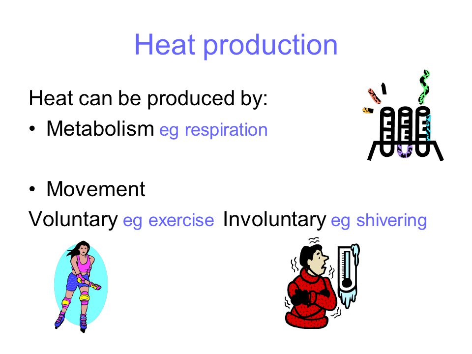 Heat production Heat can be produced by: Metabolism eg respiration Movement Voluntary eg exercise Involuntary eg shivering