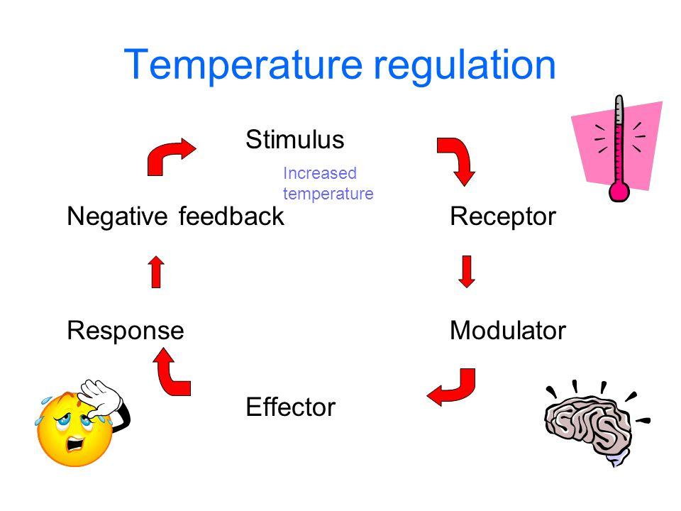 Temperature regulation Stimulus Negative feedbackReceptor ResponseModulator Effector Increased temperature