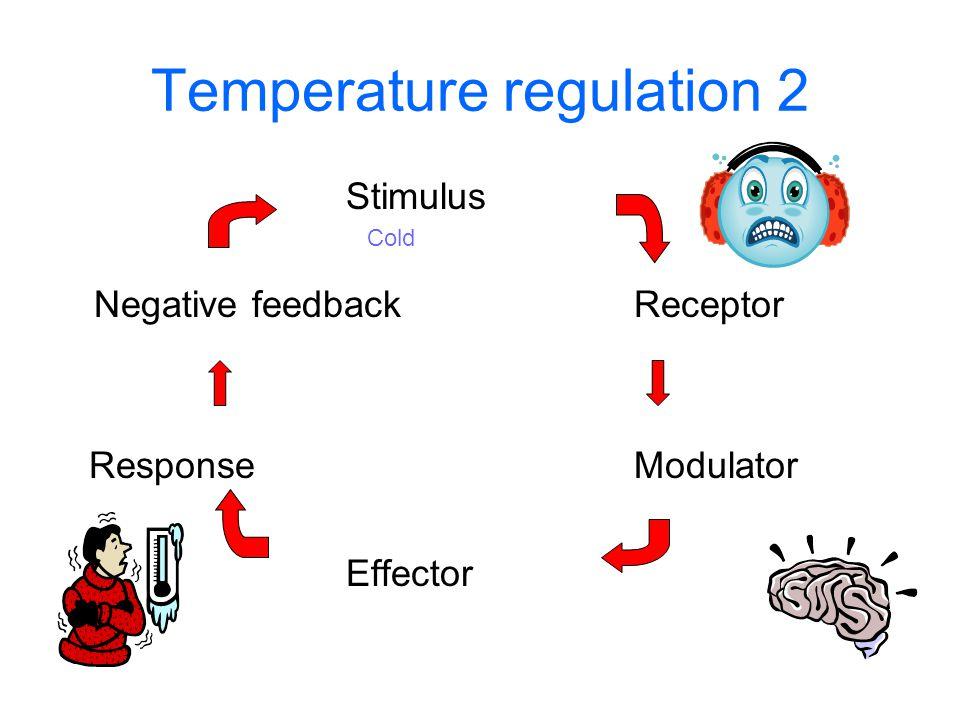 Temperature regulation 2 Stimulus Negative feedbackReceptor ResponseModulator Effector Cold