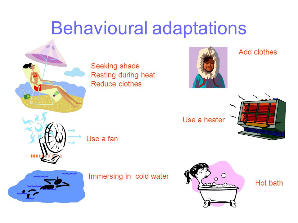Behavioural adaptations Use a fan Immersing in cold water Seeking shade Resting during heat Reduce clothes Hot bath Use a heater Add clothes