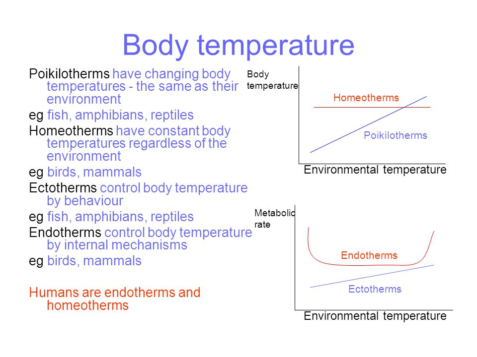 Body temperature Poikilotherms have changing body temperatures - the same as their environment eg fish, amphibians, reptiles Homeotherms have constant body temperatures regardless of the environment eg birds, mammals Ectotherms control body temperature by behaviour eg fish, amphibians, reptiles Endotherms control body temperature by internal mechanisms eg birds, mammals Humans are endotherms and homeotherms Environmental temperature Body temperature Metabolic rate Environmental temperature Poikilotherms Endotherms Homeotherms Ectotherms