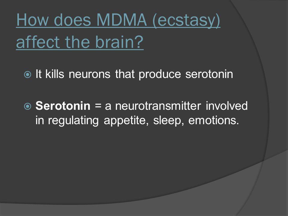 How does MDMA (ecstasy) affect the brain?  It kills neurons that produce serotonin  Serotonin = a neurotransmitter involved in regulating appetite,