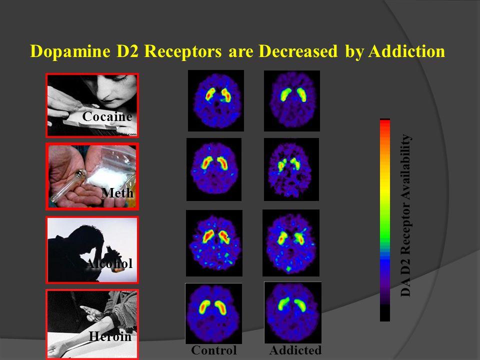 ControlAddicted Dopamine D2 Receptors are Decreased by Addiction DA D2 Receptor Availability Cocaine Alcohol Heroin Meth