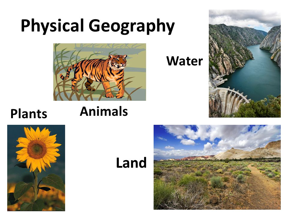 Physical Geography Plants Animals Water Land