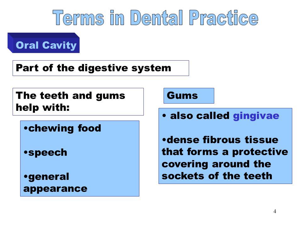 4 Oral Cavity Part of the digestive system chewing food speech general appearance Gums also called gingivae dense fibrous tissue that forms a protective covering around the sockets of the teeth The teeth and gums help with: