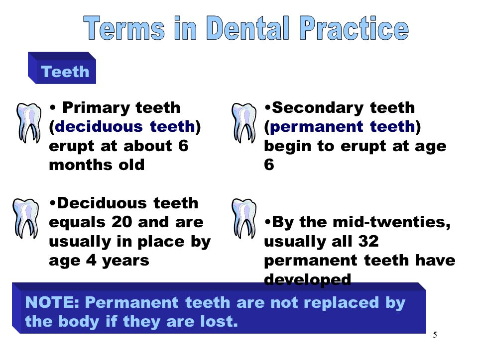 5 Teeth NOTE: Permanent teeth are not replaced by the body if they are lost.